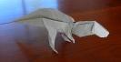 Acrocanthausaure